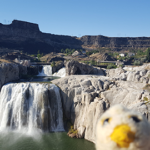 Photo Bomb at Shoshone Falls